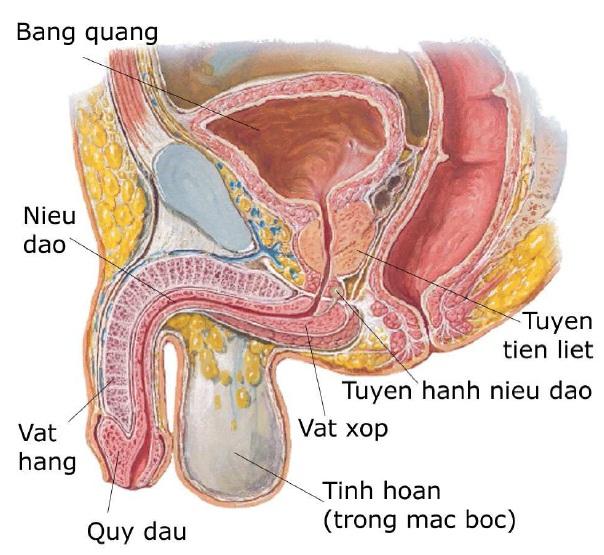 Phòng ngừa bệnh u xơ tuyến tiền liệt ở nam giới 1