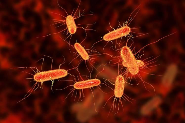 Nguy cơ nhiễm trùng 1