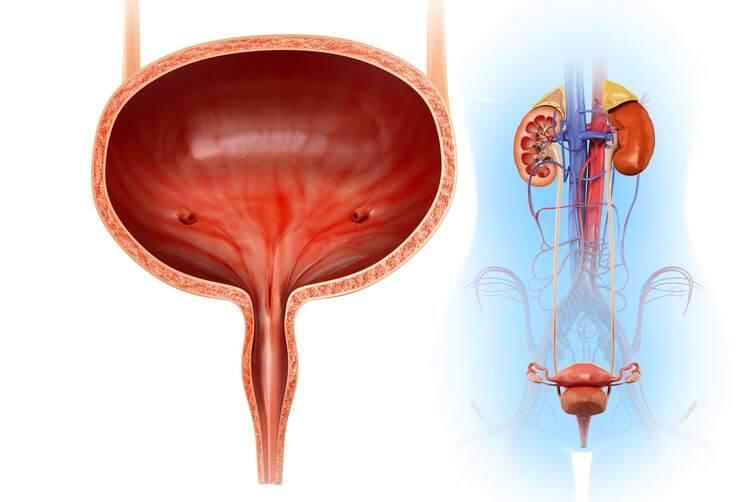 Các bệnh lý đường tiết niệu và bàng quang 1