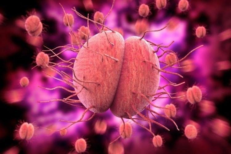 Các bệnh lây truyền qua đường tình dục 1
